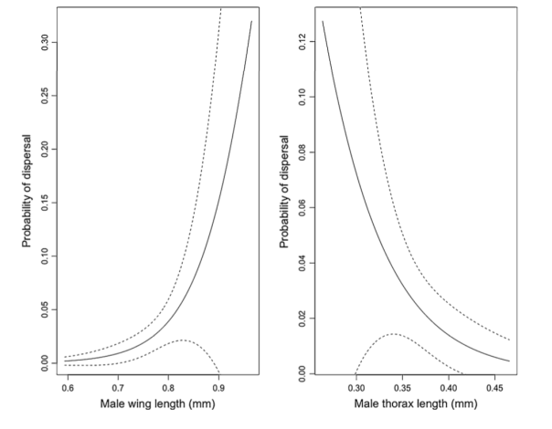 Plots showing fitted logistic curves with 95 % confidence interval (dotted lines) for the effect of male wing (left) and thorax (right) length on probability of dispersal. The data in this analysis include all emerged individuals, including those that were never re-sighted